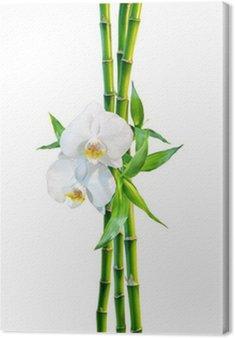 Kilka koncepcji - dwa kwiaty orchidei i pędy bambusa