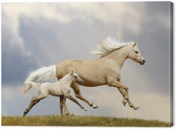 Obraz na Płótnie Klacz i źrebię pony