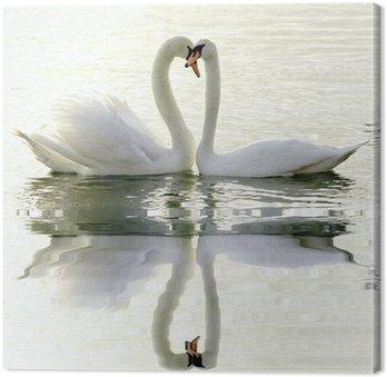 Obraz na Płótnie Kochające łabędzie