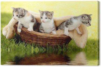 Kocięta w koszu z refleksji