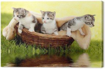 Obraz na Płótnie Kocięta w koszu z refleksji