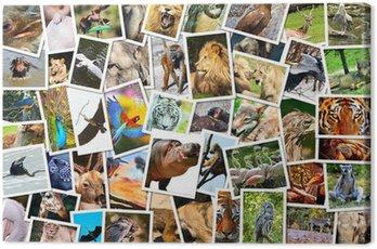 Kolaż różnych zwierząt