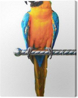 Obraz na Płótnie Kolorowe ara czerwony papuga na białym tle