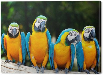 Obraz na Płótnie Kolorowe cztery ara siedzi na drzewie