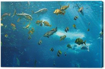 Obraz na Płótnie Kolorowe ryby
