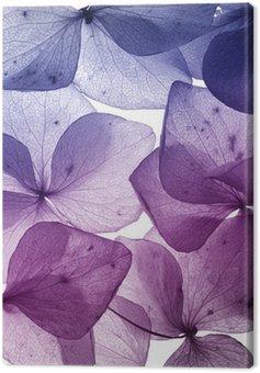 Obraz na Płótnie Kolorowy kwiat płatek zbliżenie