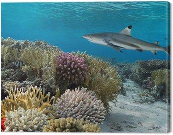 Obraz na Płótnie Kolorowy podwodny rafa koralowa z żółtym pozbawiony ryb i duże