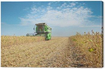 Obraz na Płótnie Kombajny do zbioru soi