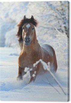 Obraz na Płótnie Koń Bay działa w zimie