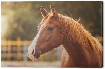 Obraz na Płótnie Koń na padoku, na zewnątrz, jeździec