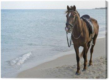 Obraz na Płótnie Koń na plaży