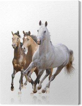 Obraz na Płótnie Konie samodzielnie
