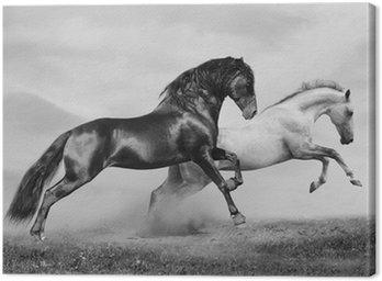 Obraz na Płótnie Konie uruchomić