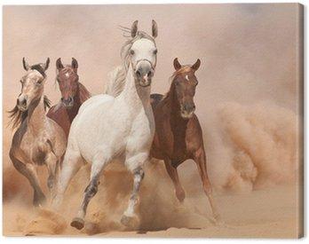 Obraz na Płótnie Konie w kurzu