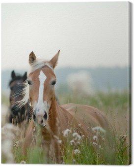 Obraz na Płótnie Konie w polu