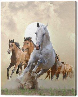 Obraz na Płótnie Konie w zachodzie słońca