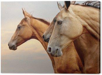 Obraz na Płótnie Konie