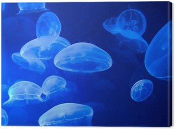 Obraz na Płótnie Kopytka morze, Jellyfish