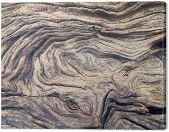 Obraz na Płótnie Kora drzewa tekstury drewna