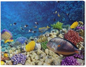 Obraz na Płótnie Koral i ryb w czerwonym sea.egypt