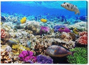Koral i ryb w morzu czerwonym. Egipt, Afryka.