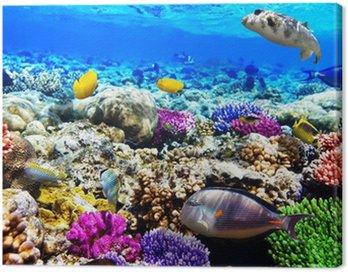 Obraz na Płótnie Koral i ryb w morzu czerwonym. Egipt, Afryka.