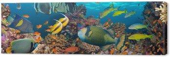 Obraz na Płótnie Koral i ryb