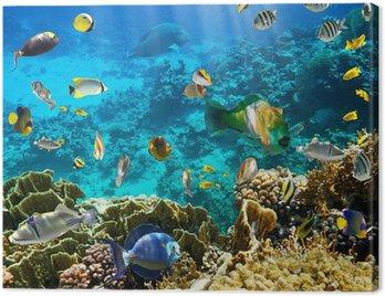 Obraz na Płótnie Koral kolonii koralowców i ryb