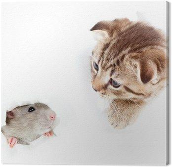 Obraz na Płótnie Kot i szczur domowy patrząc dziurę w rozdartym