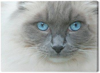Obraz na Płótnie Kot o imieniu Elvis