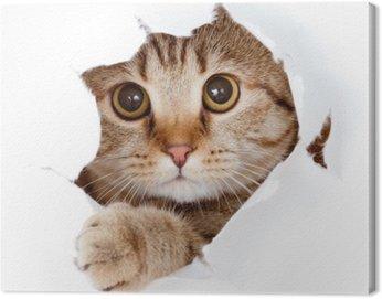 Obraz na Płótnie Kot patrząc w stronę papieru podarte izolowane otworu