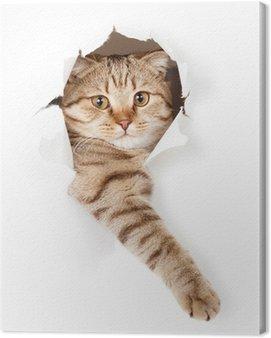 Obraz na Płótnie Kot w białym tapety dziury