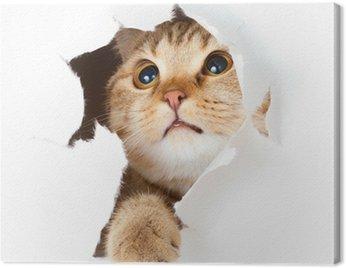 Obraz na Płótnie Kot w stronę papieru podarte izolowane otworu