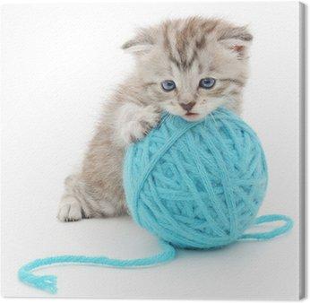 Obraz na Płótnie Kot z motka