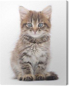Obraz na Płótnie Kotek na białym tle