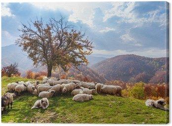 Obraz na Płótnie Krajobraz jesienią, owce, shepard dog