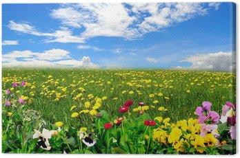 Obraz na Płótnie Krajobraz łąka niebo wiosenne kwiaty