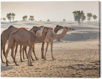 Obraz na Płótnie Krajobraz pustyni z wielbłąda