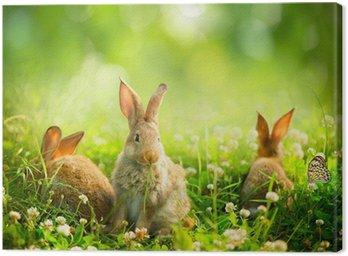 Obraz na Płótnie Króliki. Art Design cute little wielkanocne króliczki na łące.