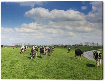 Obraz na Płótnie Krów stojących w łąki w Holandii