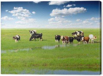 Krów wypasanych na łące latem zielony