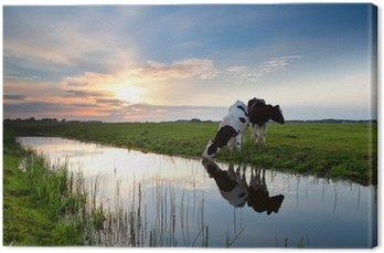 Obraz na Płótnie Krów wypasanych na zachodzie słońca.