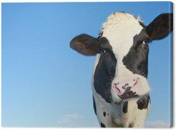 Krowa Holstein przeciwko nieba
