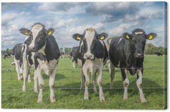 Obraz na Płótnie Krowa na łące