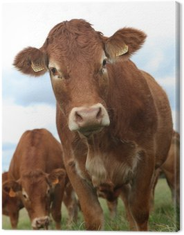 Obraz na Płótnie Krowa portret