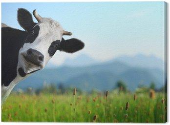 Obraz na Płótnie Krowa
