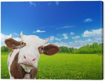 Obraz na Płótnie Krowy i pole świeżej trawy