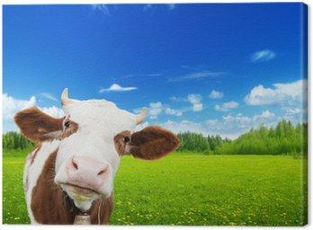 Krowy i pole świeżej trawy