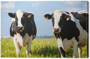 Obraz na Płótnie Krowy na wsi na wiosnę