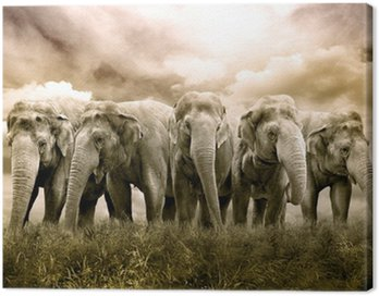 Obraz na Płótnie Kuracja słonia
